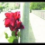 waam(rosa) copy